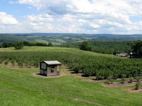 murphys blueberry farm